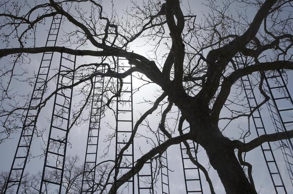 « L'Arbre aux échelles » de François Méchain